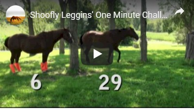 Shoofly Leggins One minute Challenge